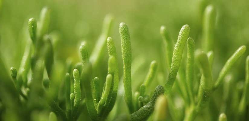 Az alga az élet forrása